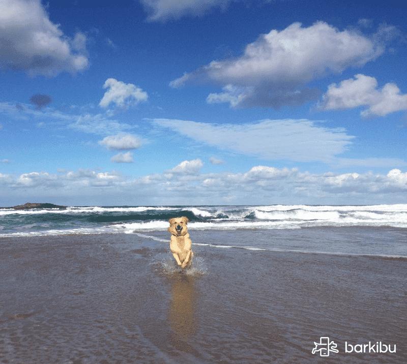Cu nto cuesta tener un perro barkibu es for Cuanto cuesta un segway