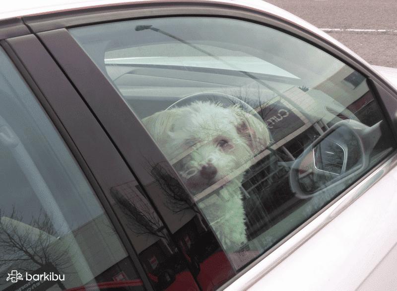 viaje-perro