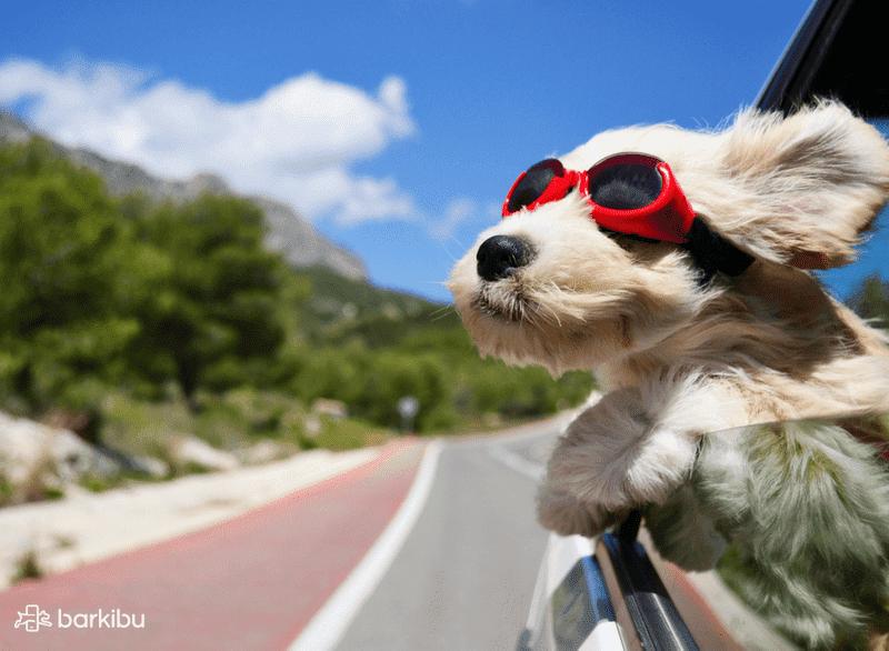 perro-viaje-2