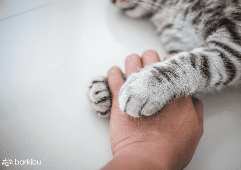 gato-humano