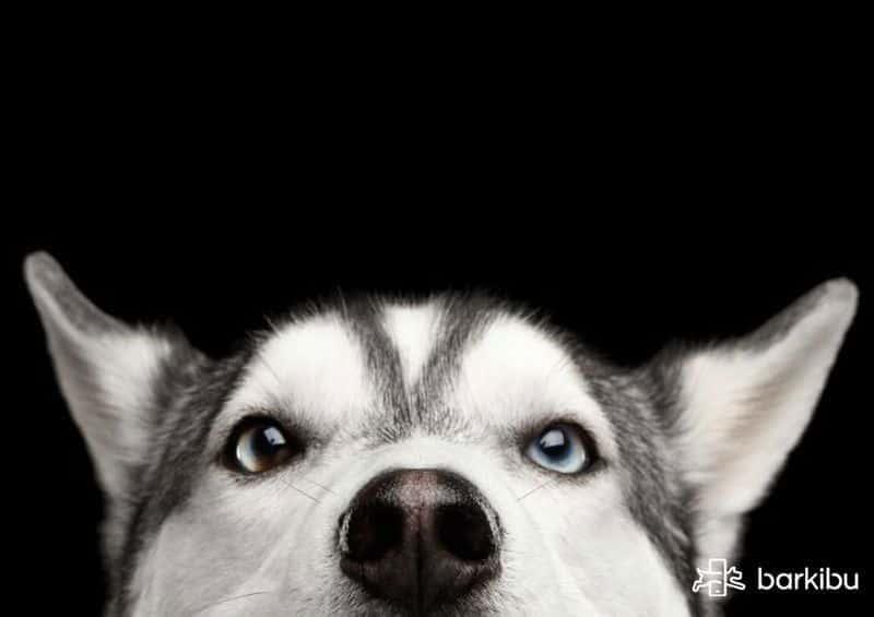 Mi Perro Está Raro, Como Triste. ¿Qué Tiene? No Se
