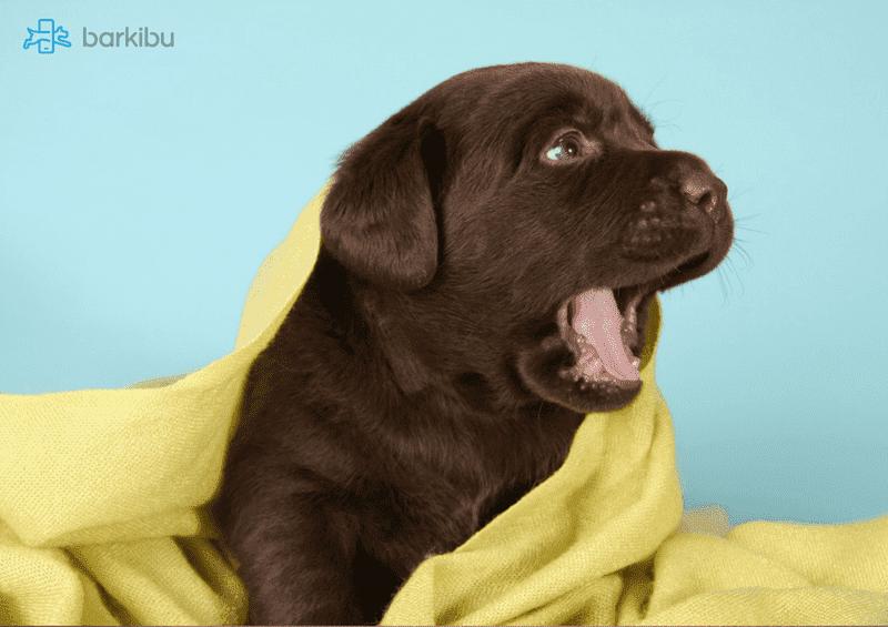 cachorro cama ladrido