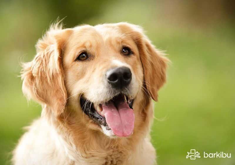 Mi perro tiene hipo muy seguido qu le pasa barkibu es - Cuando se puede banar a un perro ...