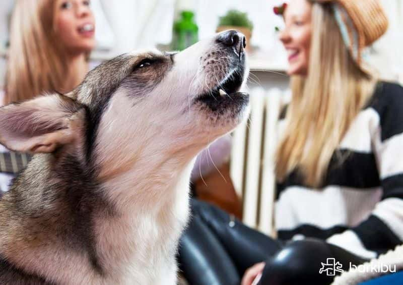 Benign tumors in dogs - How to treat dog tumors at home, is