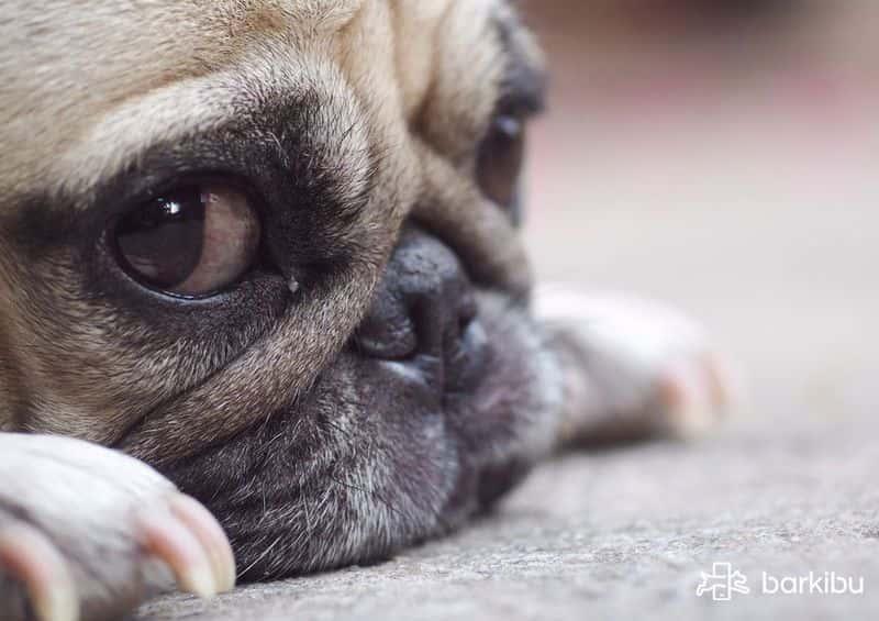 Esa es la cara de un perrito mojado chuchitos t la - Remedios caseros para que mi perro no muerda los muebles ...