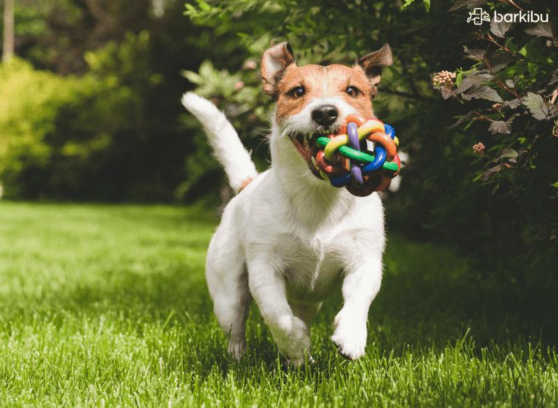 perro-campo