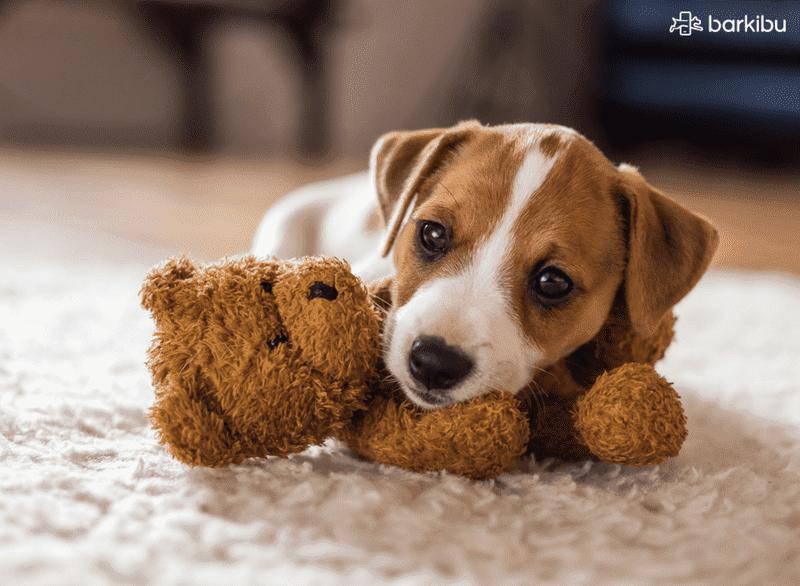 Nombres Para Perros Descubre Los Más Bonitos Y Originales Barkibu Es