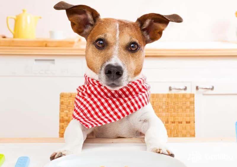 por qué mi perro no engorda y parece desnutrido? - barkibu es