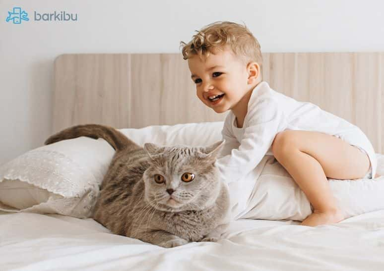Aggresive cats and new baby - Signs of a jealous cat - Barkibu ES