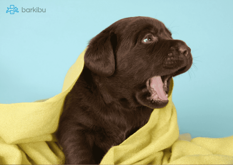 My dog barks all day while I am at work - How to stop my dog barking