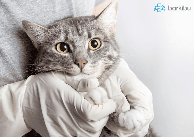 Vif el sida felino barkibu es for El sida se contagia por saliva
