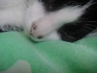 Inclina la cabeza en gatos, Callejero