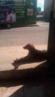 Una mascota, tiene picor y rascarse