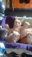 Son Bebés De 3 Semanas, mi gato desconocida hembra, tiene secreción ocular