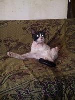Sed excesiva en gatos, Desconocida