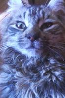 Polilla, mi gato desconocida hembra, tiene mucho moco en la nariz y sangrado de nariz