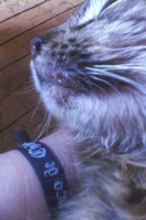 Sangrado de nariz en gatos, Desconocida
