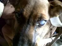 Capitan, mi perro criollito cruzadito macho, tiene agresiones