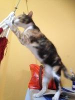 Lynda, mi gato normal no tiene raza hembra, tiene sangre en orina, orina muy poco y orina demasiado frecuentemente