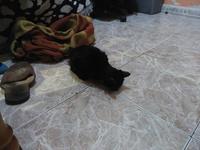 Morty, mi gato desconocida macho, tiene inclina la cabeza y dificultad al caminar o levantarse