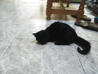 Inclina la cabeza en gatos, Desconocida