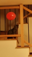 Tico, mi gato común europeo macho, tiene tos y arcadas