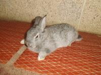 Hermosa, mi roedor conejo hembra, tiene dificultad al caminar o levantarse