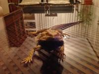 Vómito en reptiles, Desconocida