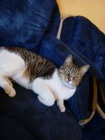 Manchas, mi gato desconocida hembra, tiene incontinencia