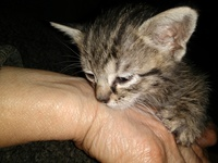 Rallada, mi gato desconocida hembra, tiene dificultad al tragar, vómito, y mal apetito