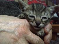 Dificultad al tragar en gatos, Desconocida