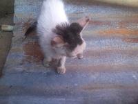 Muneco, mi gato desconocida macho, tiene picor y rascarse, ojos rojos, y nubes o película transparente blanca en los ojos