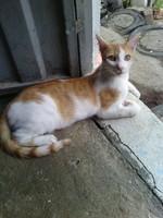 Mono, mi gato desconocida macho, tiene mal apetito y diarrea