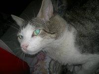 Gatoloco, mi gato cruce de desconocida y desconocida macho, tiene mordeduras