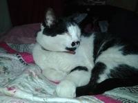 Orina en casa en gatos, Desconocida