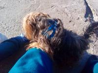Paco, mi perro yorkshire terrier macho, tiene orina en casa