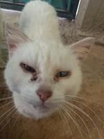 Nina, mi gato desconocida hembra, tiene secreción ocular