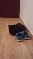 Orina muy poco en gatos, Desconocida