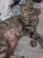mi gato tiene una pelota en la pierna