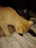 Patata, mi gato desconocida macho, tiene sangre en las heces, vómito y diarrea