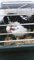 Mordeduras en roedores, Desconocida
