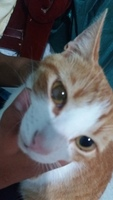 Violeta, mi gato cruce de desconocida y desconocida hembra, tiene nubes o película transparente blanca en los ojos