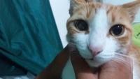 Nubes o película transparente blanca en los ojos en gatos, Desconocida