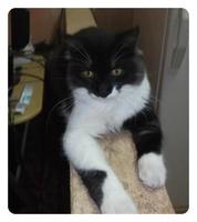 Jacko, mi gato desconocida macho, tiene diarrea