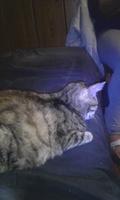Dificultad al masticar en gatos, W
