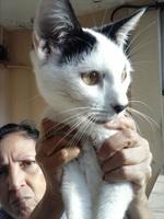 Nena, mi gato desconocida hembra, tiene dificultad al tragar