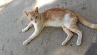 Solovino, mi gato desconocida macho, tiene mal apetito