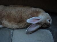 Pancho, mi roedor desconocida macho, tiene debilidad, dificultad al caminar o levantarse, y inclina la cabeza