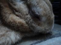 Debilidad en roedores, Desconocida