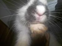 Duqueza, mi mascota desconocida hembra, tiene estornudos, mucho moco en la nariz, y respiración ruidosa